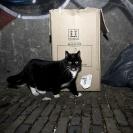 Kat in de Stad Utrecht_1