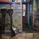 Kat in de Stad Utrecht_2