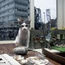 Kat in de Stad Utrecht_4